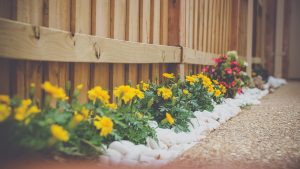 Flowers in bed along fence