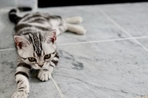 Grey and black striped kitten laying on grey granite tile floor
